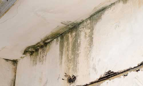 Mold and Mildew Damage